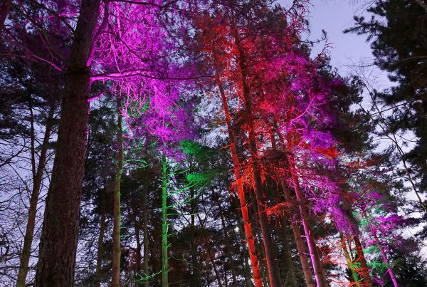 Trees lit up with multicoloured lighting at Center Parcs Elveden Forest for Christmas