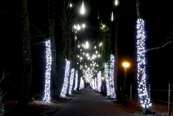 Center Parcs Longleat Forest lit trees on either side of the walkway with meteor lights above