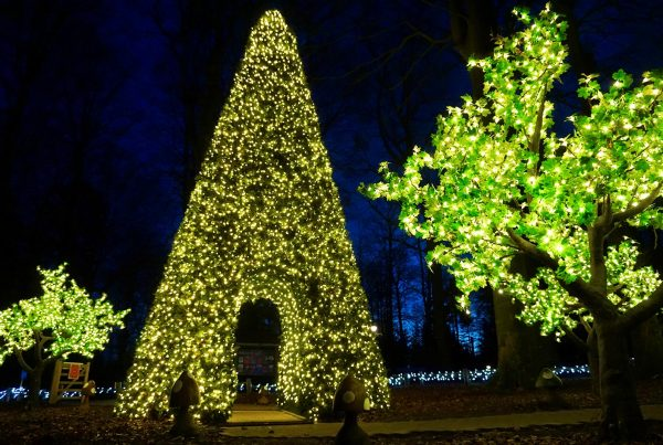 9m metre tall walk-through Christmas tree, in garden setting at Center Parcs Longleat Forest